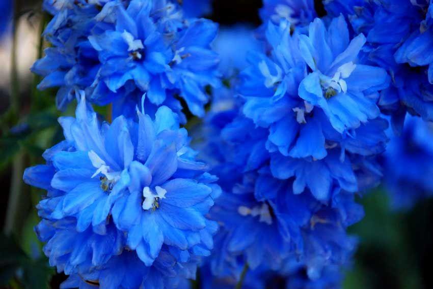 Flores azules fondos para mensajes pinterest for Decoracion de parques y jardines