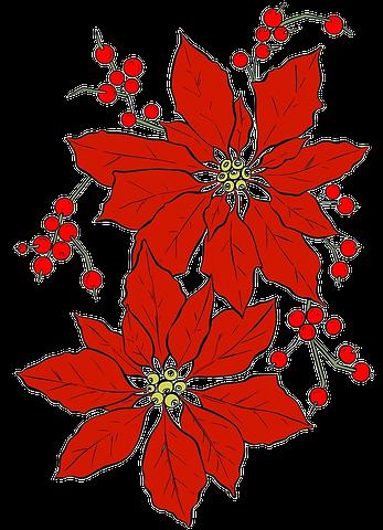 Poinsettia, Noël, Fleur Rouge Fleurs rouges, Fleur de