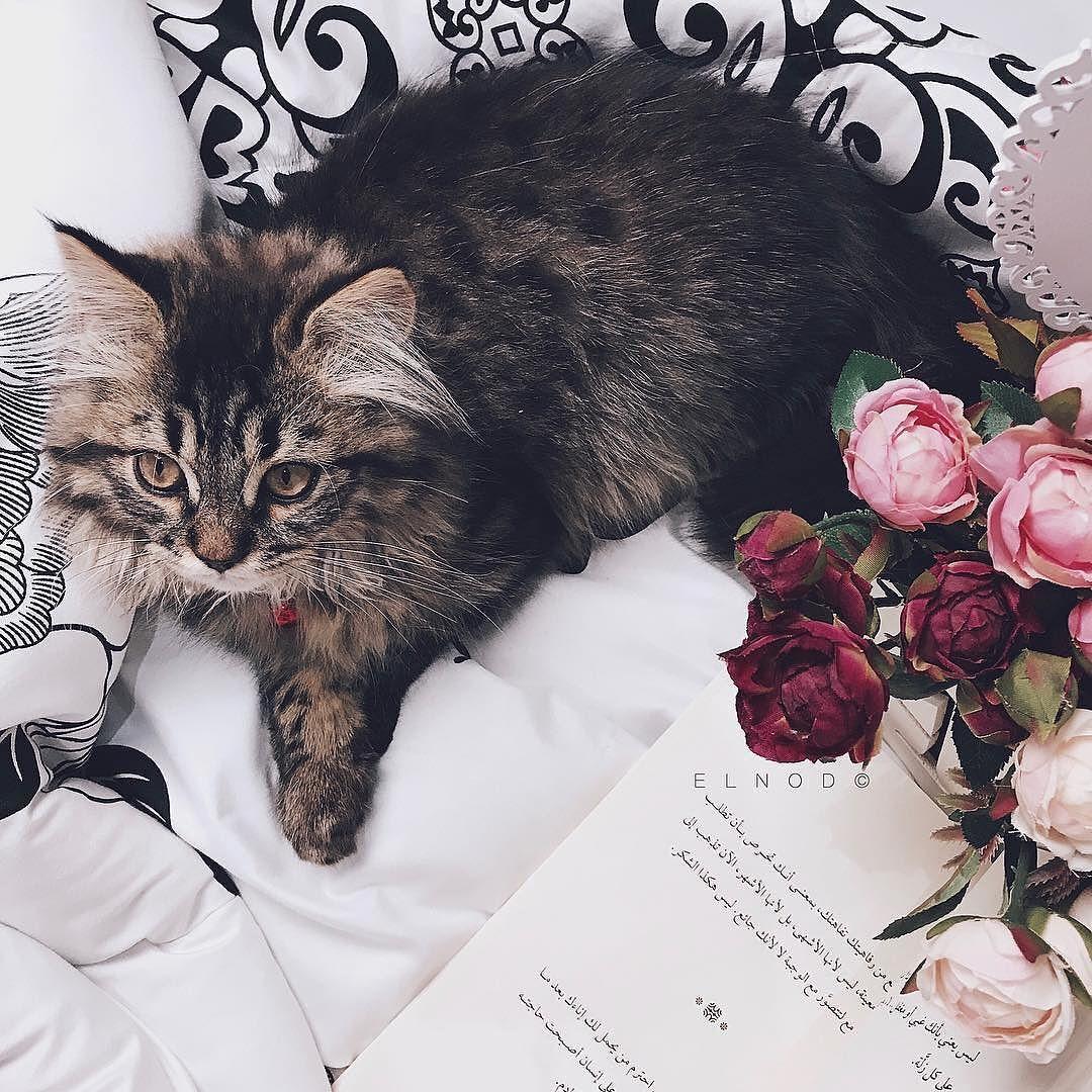 لذيذ النظر فيك عجزت أشبعك ㅤ ㅤ ㅤ By Elnod ㅤ Chosen By Rawasi ㅤ التقييم مـن 5 ㅤㅤㅤㅤ تـاقـزات لنشر صوركم الجميلة مع كلمات تلامس مشاع Cats