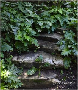 Photo of Un giardino salvato dai rovi, dal degrado e soprattutto dalla speculazione edili…