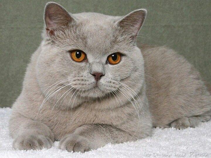 Pin De Lindalva Andrade Gomes Em Gatos Animais De Estimação Gatos Estimação