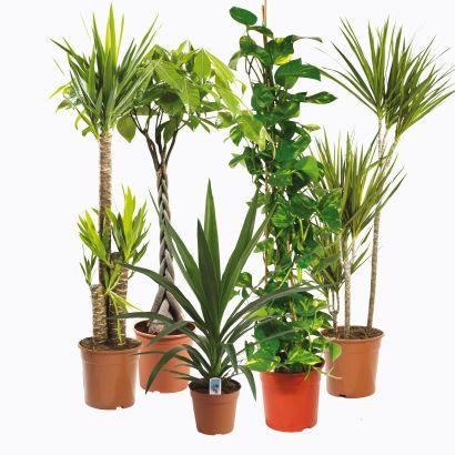 plante verte xxl