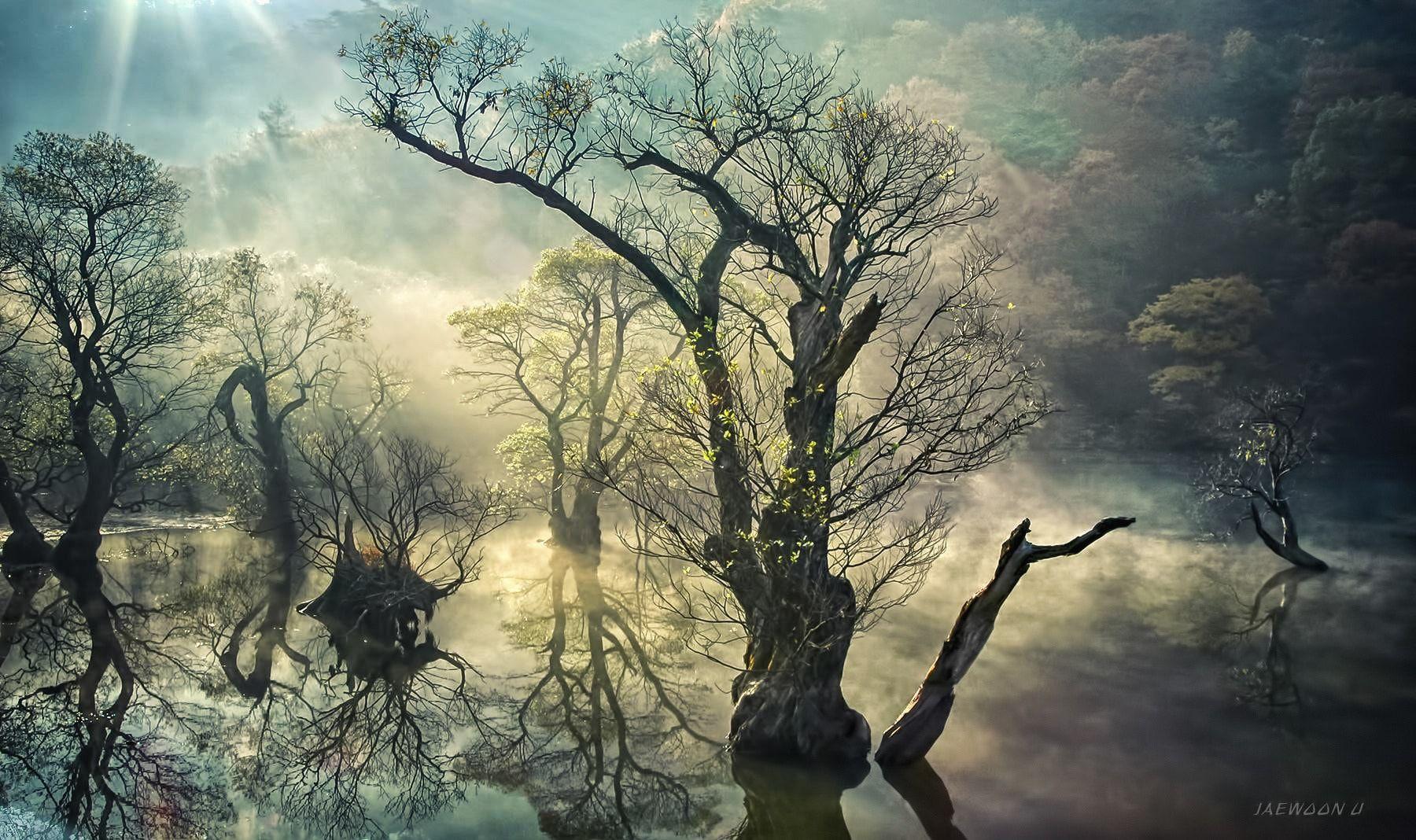 Memory of Jusan lake - 주산지의 기억...