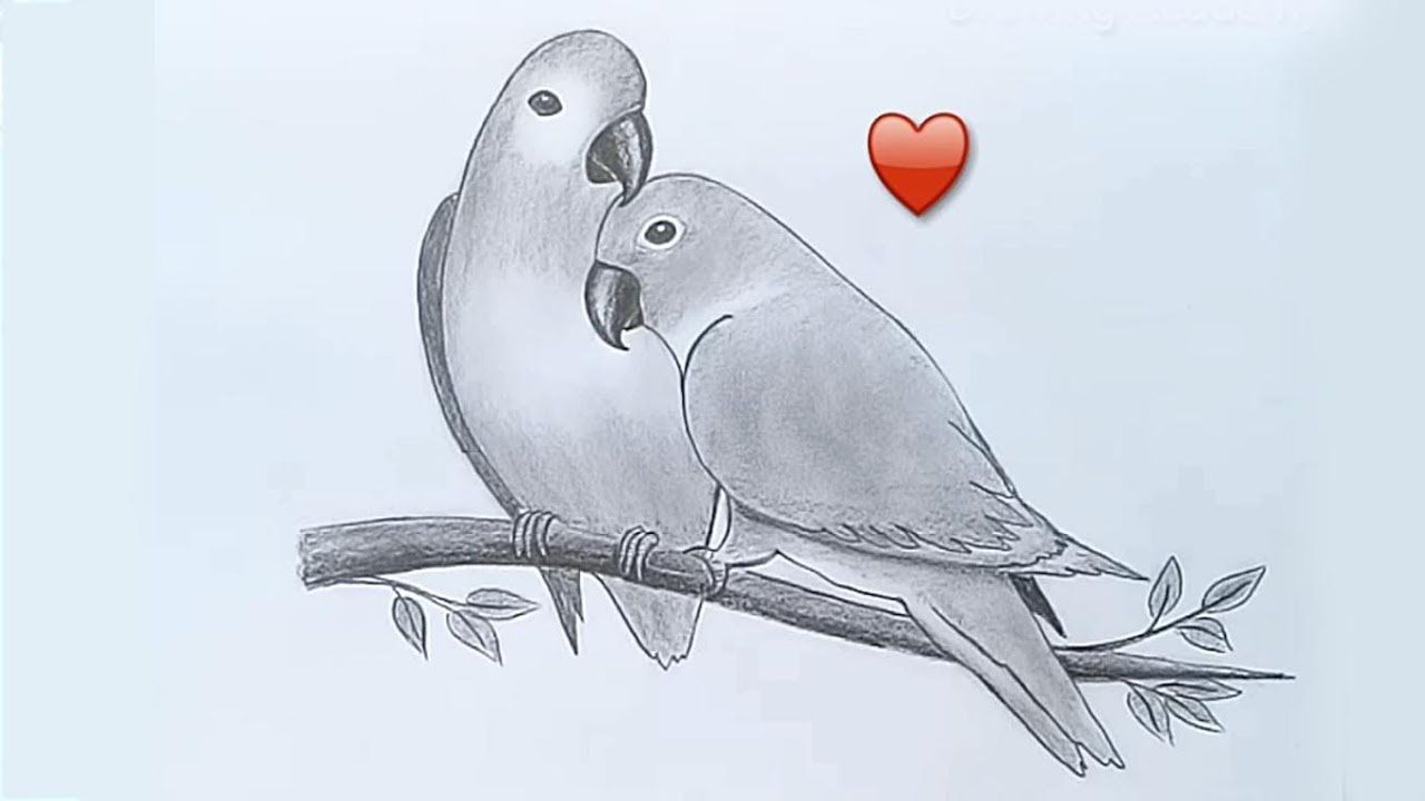 Two Parrots In Love By Pencil Sketch With Images Sketches