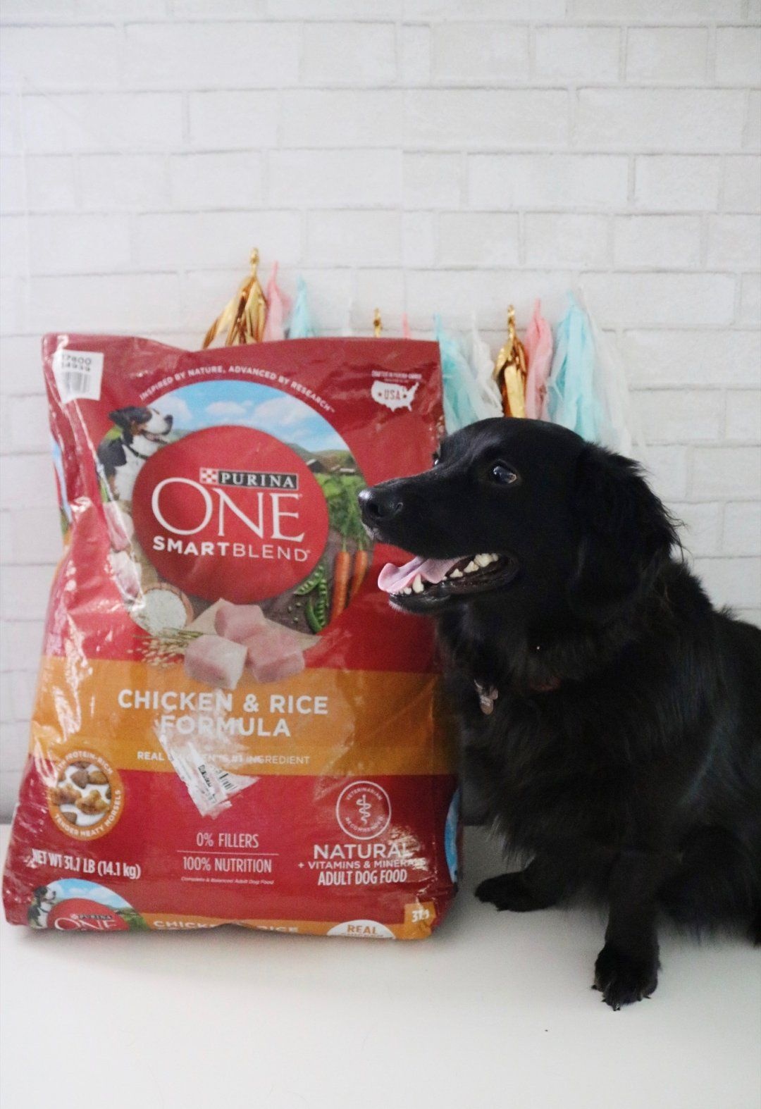 Three Simple Ways To Save Money On Dog Food Dog Food Recipes