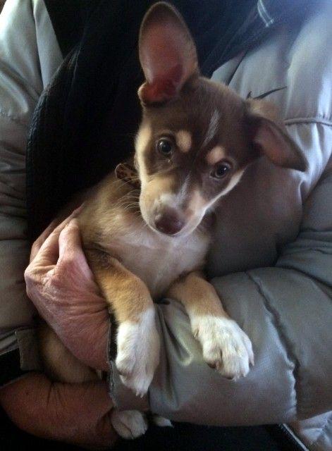Adopt Dakota On Dogs I Love Dogs Beagle Mix