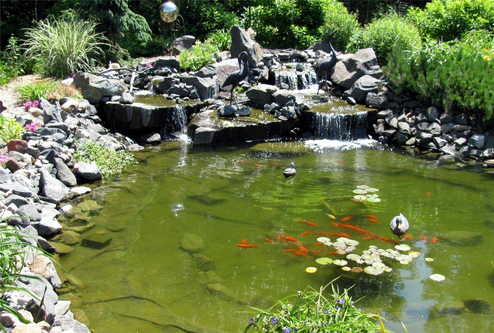 How To Maintain A Koi Pond Through A Minnesota Winter Koi Pond Ponds Backyard Minnesota Winter