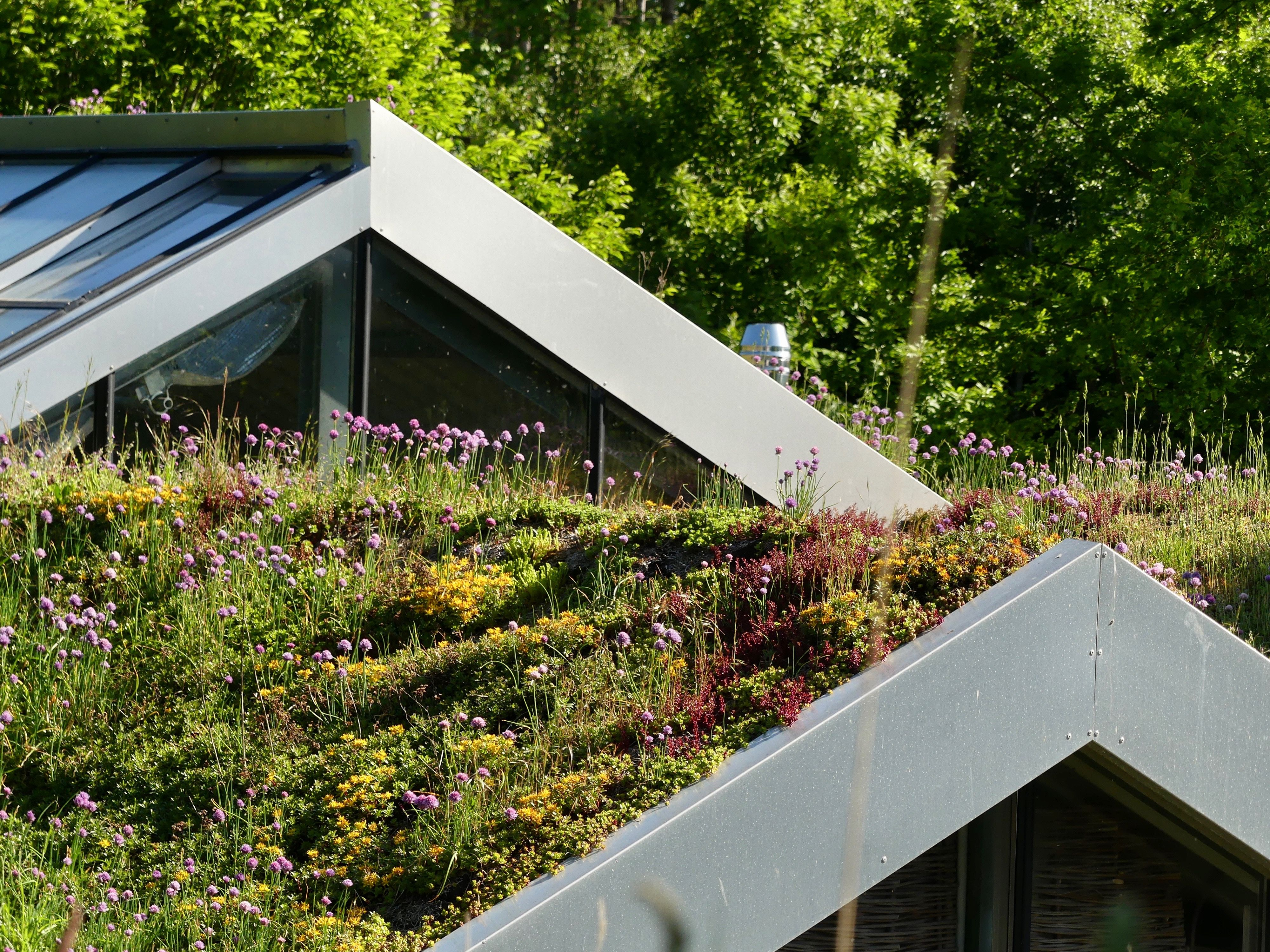 Green Roofs A Guide To The Options Carport Designs Green Roof Green Roof House