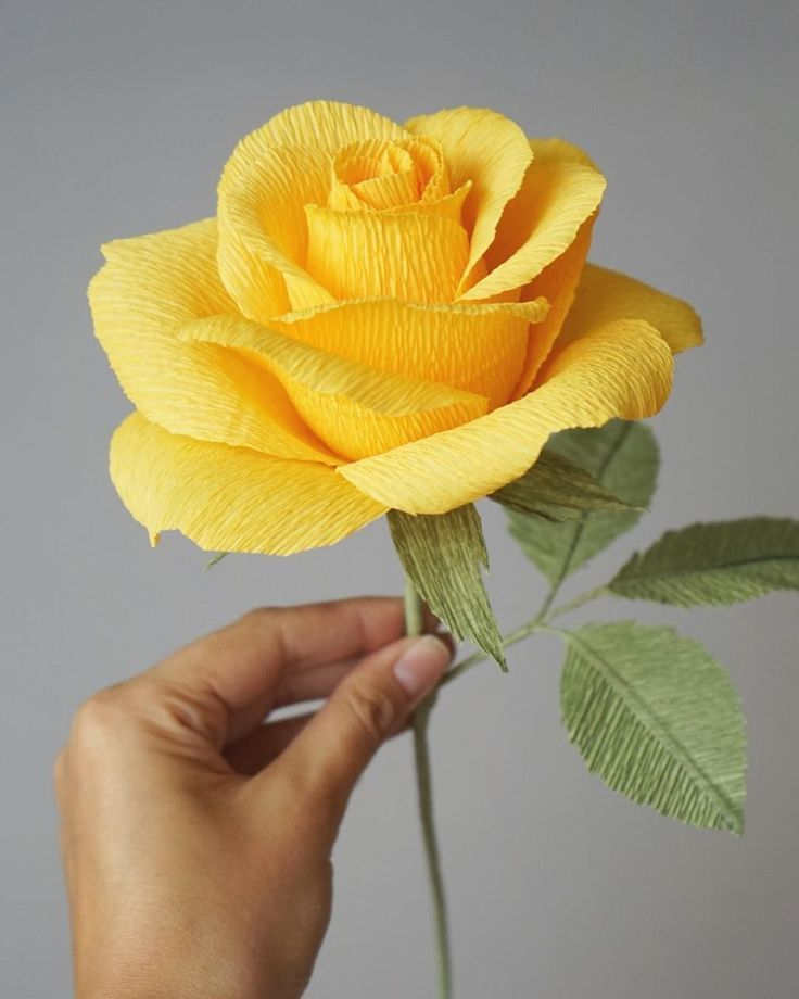 How do you like our new crepe paper rose? How do you like our new crepe paper ro...- How do you like our new crepe paper rose? How do you like our new crepe paper ro…  How do you like our new crepe paper rose? How do you…  -#test #crepepaperroses How do you like our new crepe paper rose? How do you like our new crepe paper ro...- How do you like our new crepe paper rose? How do you like our new crepe paper ro…  How do you like our new crepe paper rose? How do you…  -#test #crepepaperroses