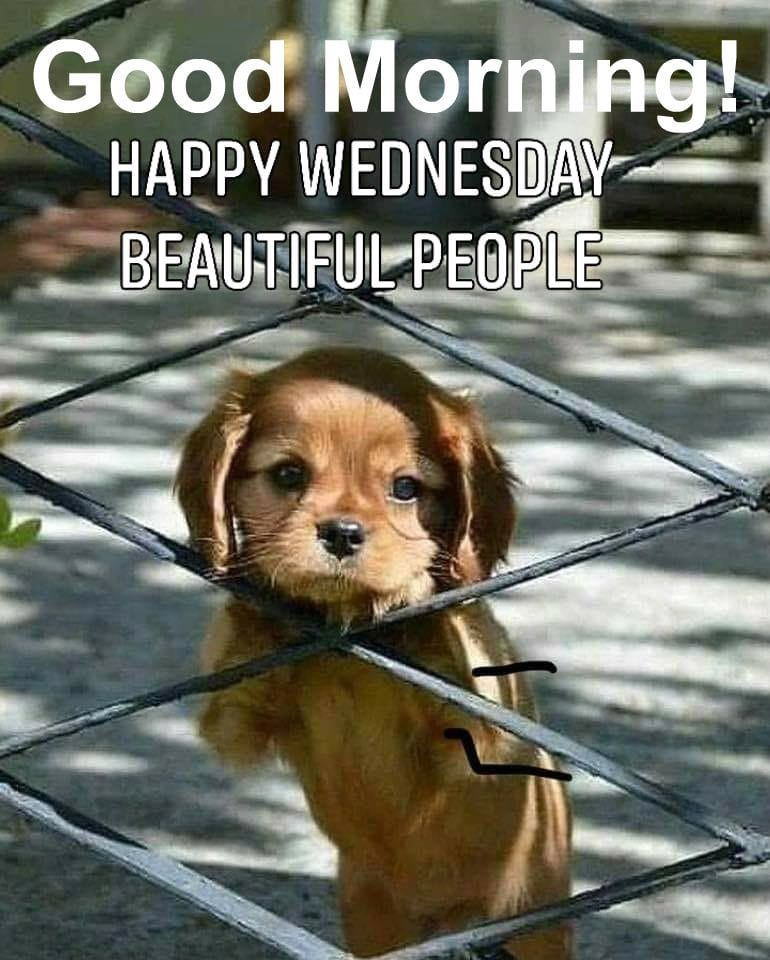 Pin By Mari R On Monday Through Friday Dog Quotes Good Morning Wednesday Good Morning Friends
