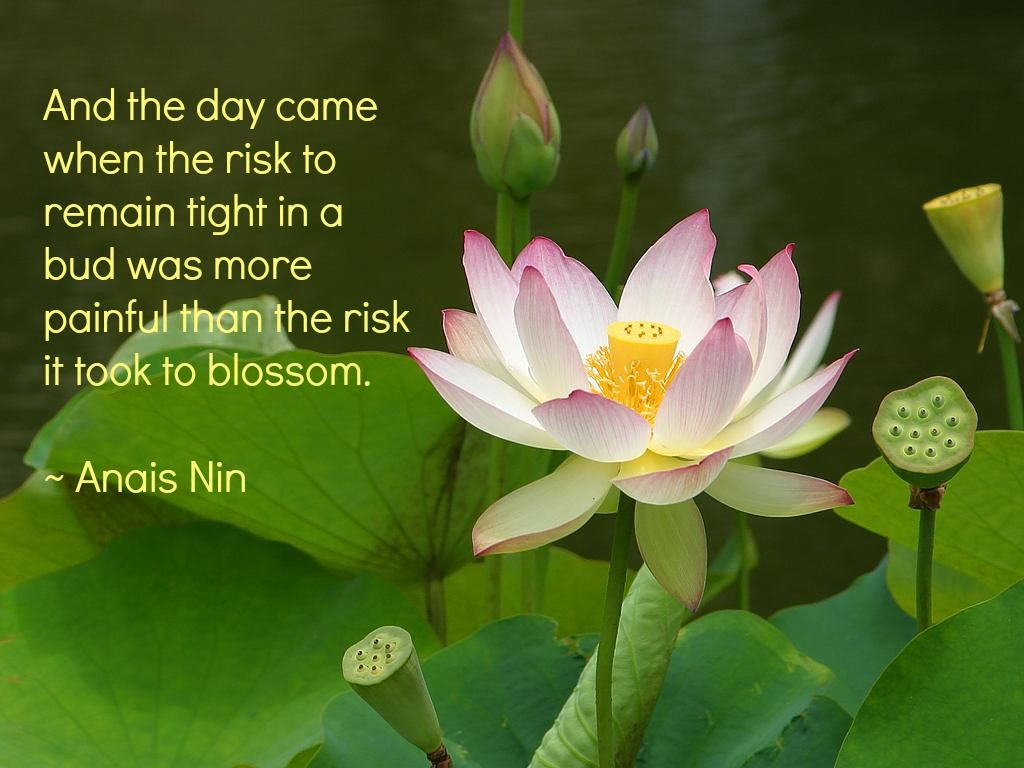 Quotes About Lotus Google Search Lotus Love Pinterest Lotus