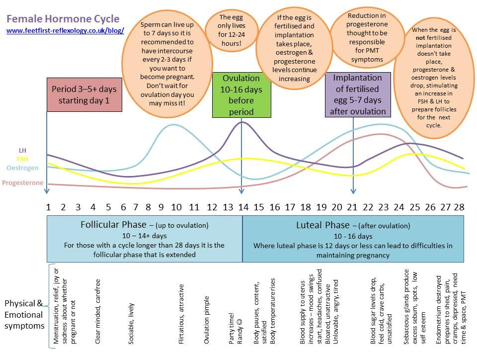 Female Hormone Cycle My First Attempt At An Infographic Www Feetfirst Reflexology Co Uk Blog Female Hormones Hormones Womens Health