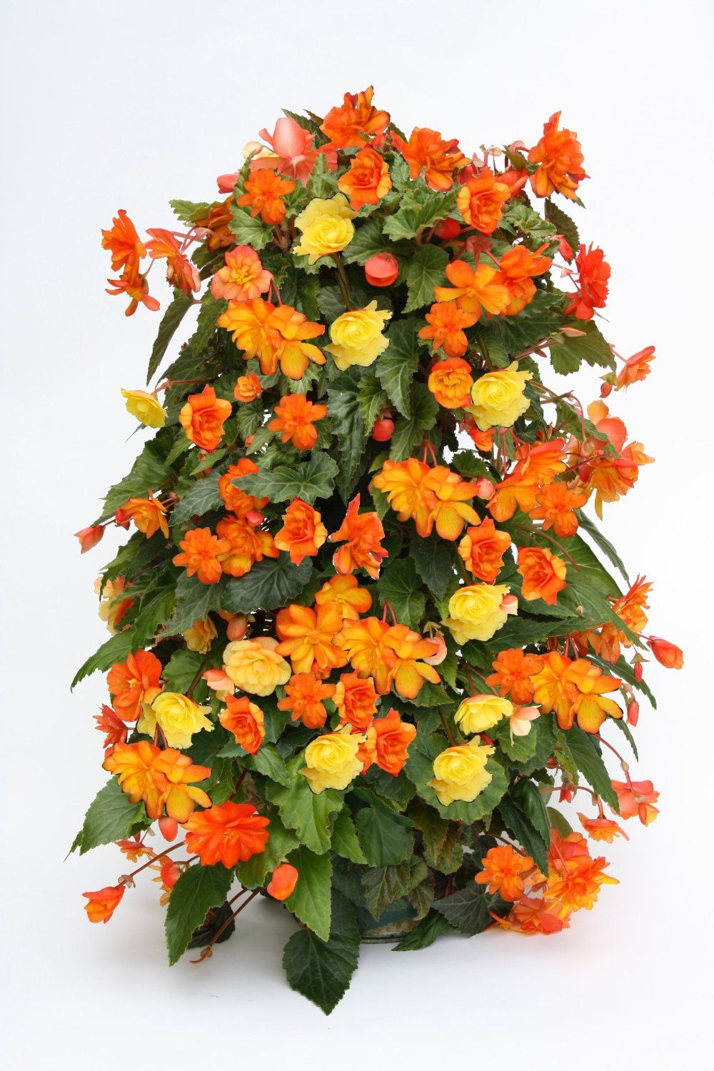 Begonia Flower Tower Flower Tower Planter Stand Vertical Planter