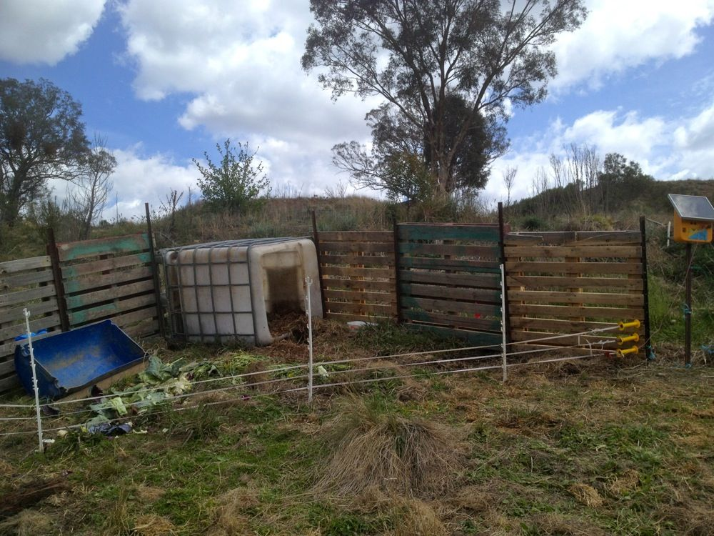 Ordinaire Starter Piglet Area To Teach Pastured Pigs To Respect An Electric Fence.