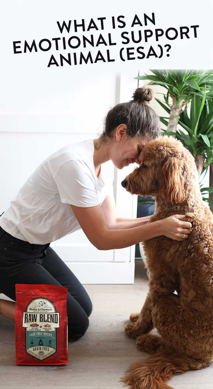 What is an Emotional Support Animal (ESA)? How do you get