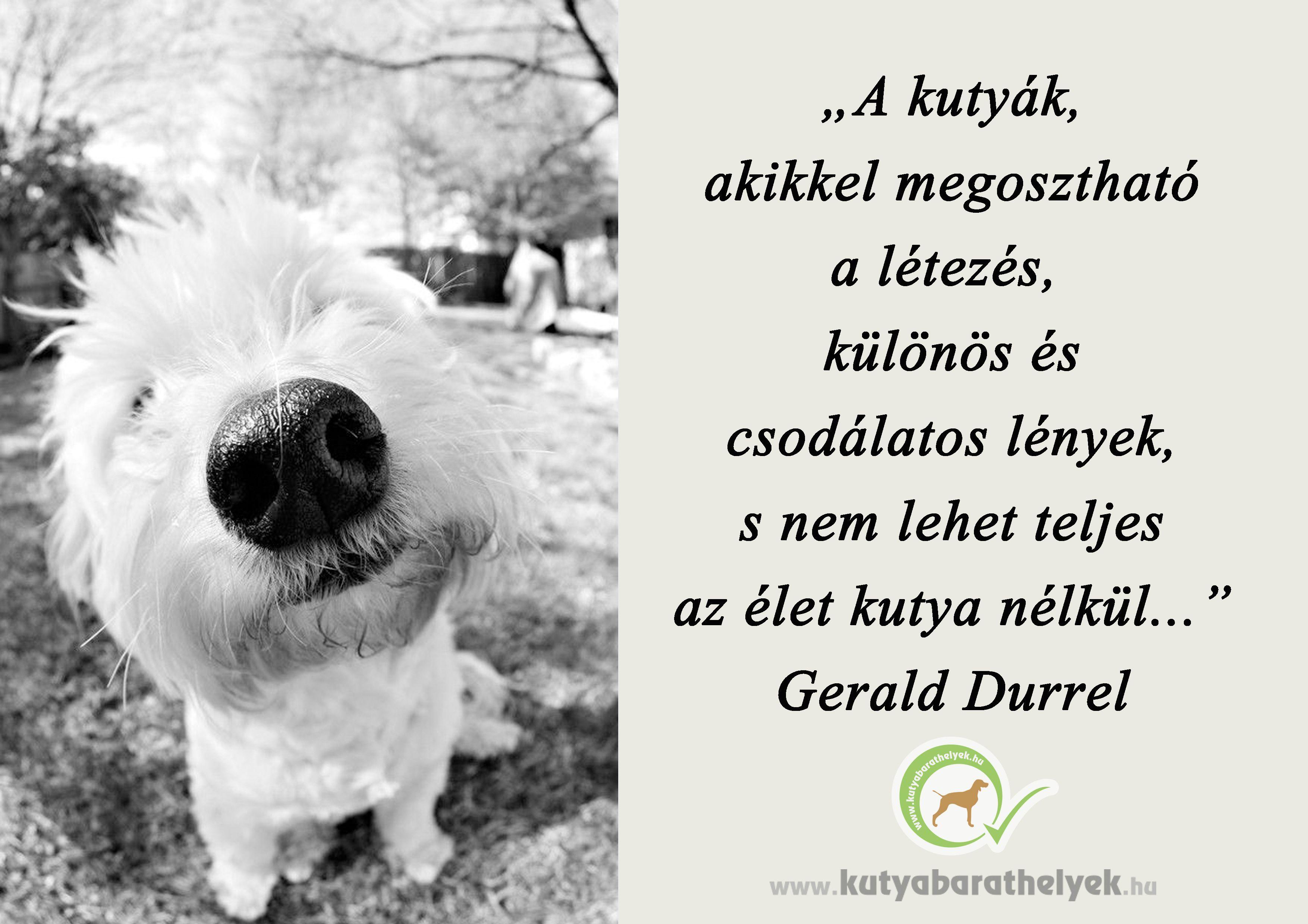 a023a2546 A kutyák, akikkel megosztható a létezés, különös és csodálatos ...