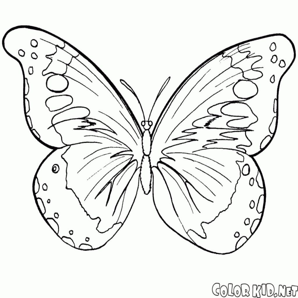 Disegni Da Colorare Farfalla E Lestate Per Quanto Riguarda