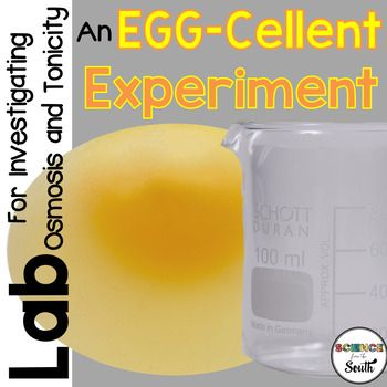 Scientific Videos: Osmosis Practical with Eggs