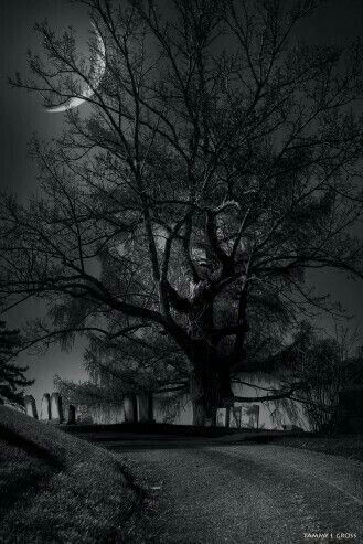 Pin by Mari Eduarda on Nature | Dark photography, Cemeteries, Mysterious places