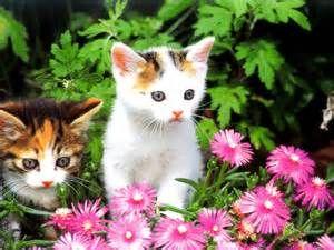 kitten in roze bloemen