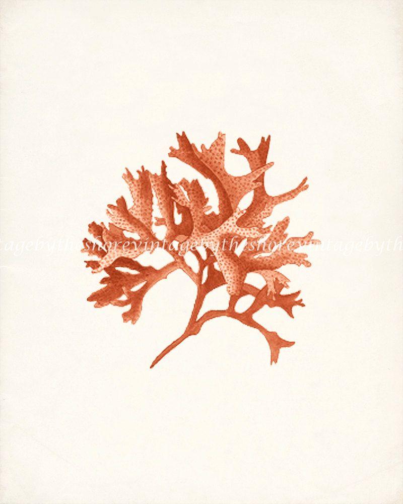 Vintage pacific sea kelp no wall decor print x coral