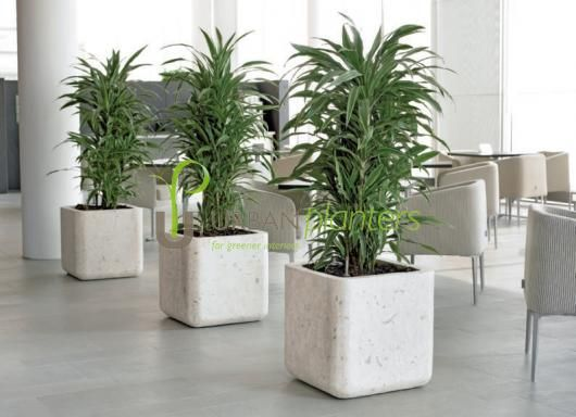 Office Plants Interior Landscaping Tropical Live Artificial Plant Displays