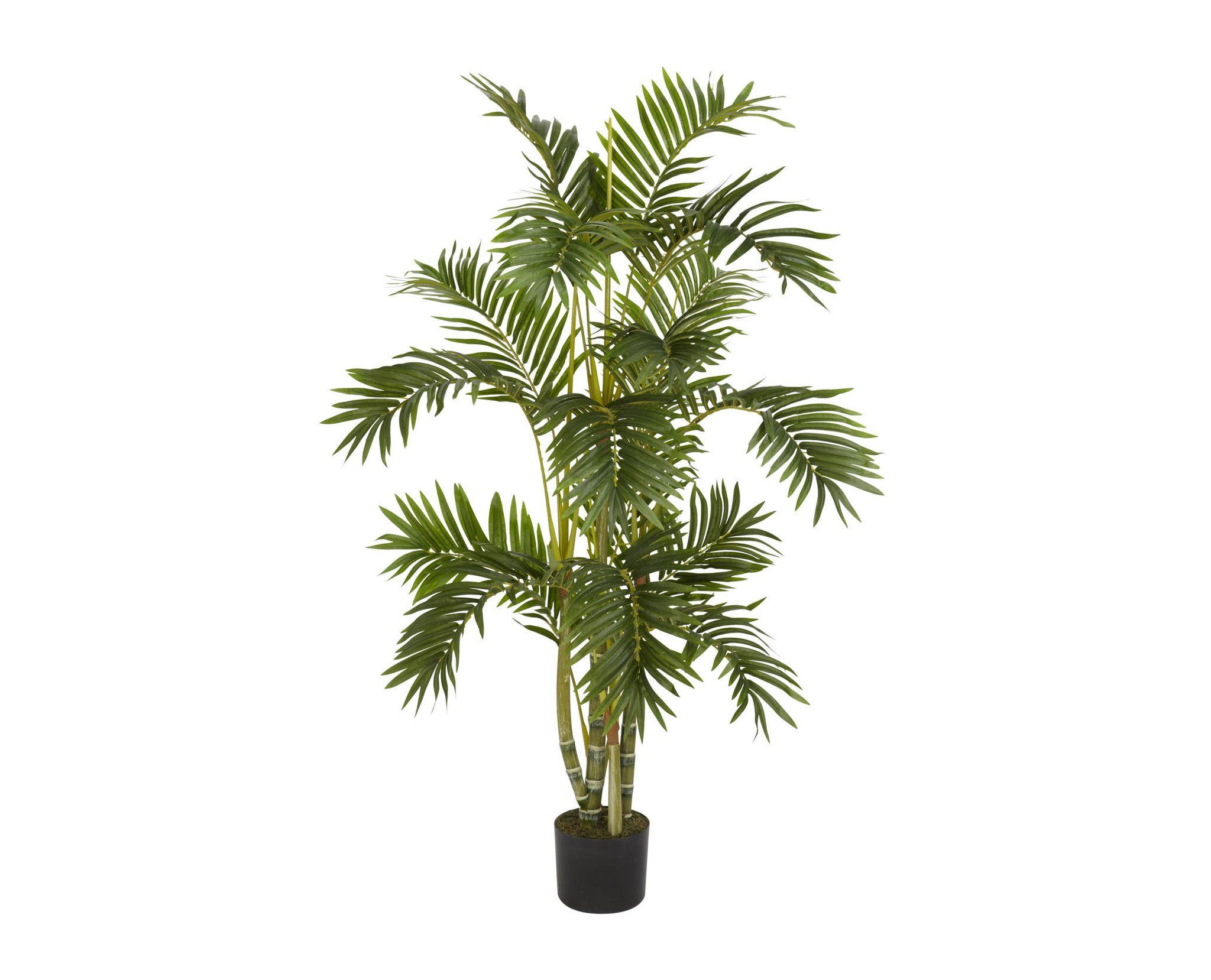 Png Palm Tree Google Search Art Pinterest
