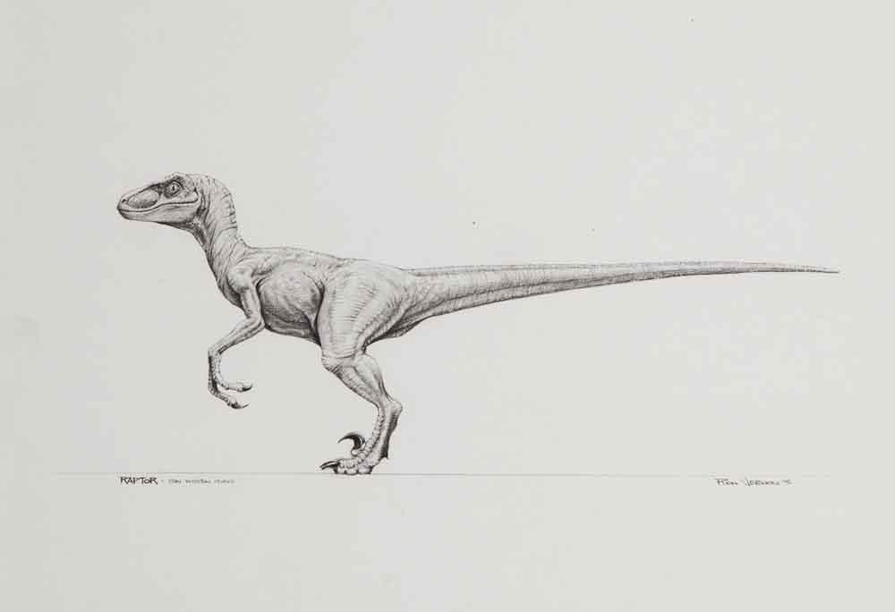 Jurassic Park Velociraptor | - AA Dibujo: Naturaleza / Animales ...