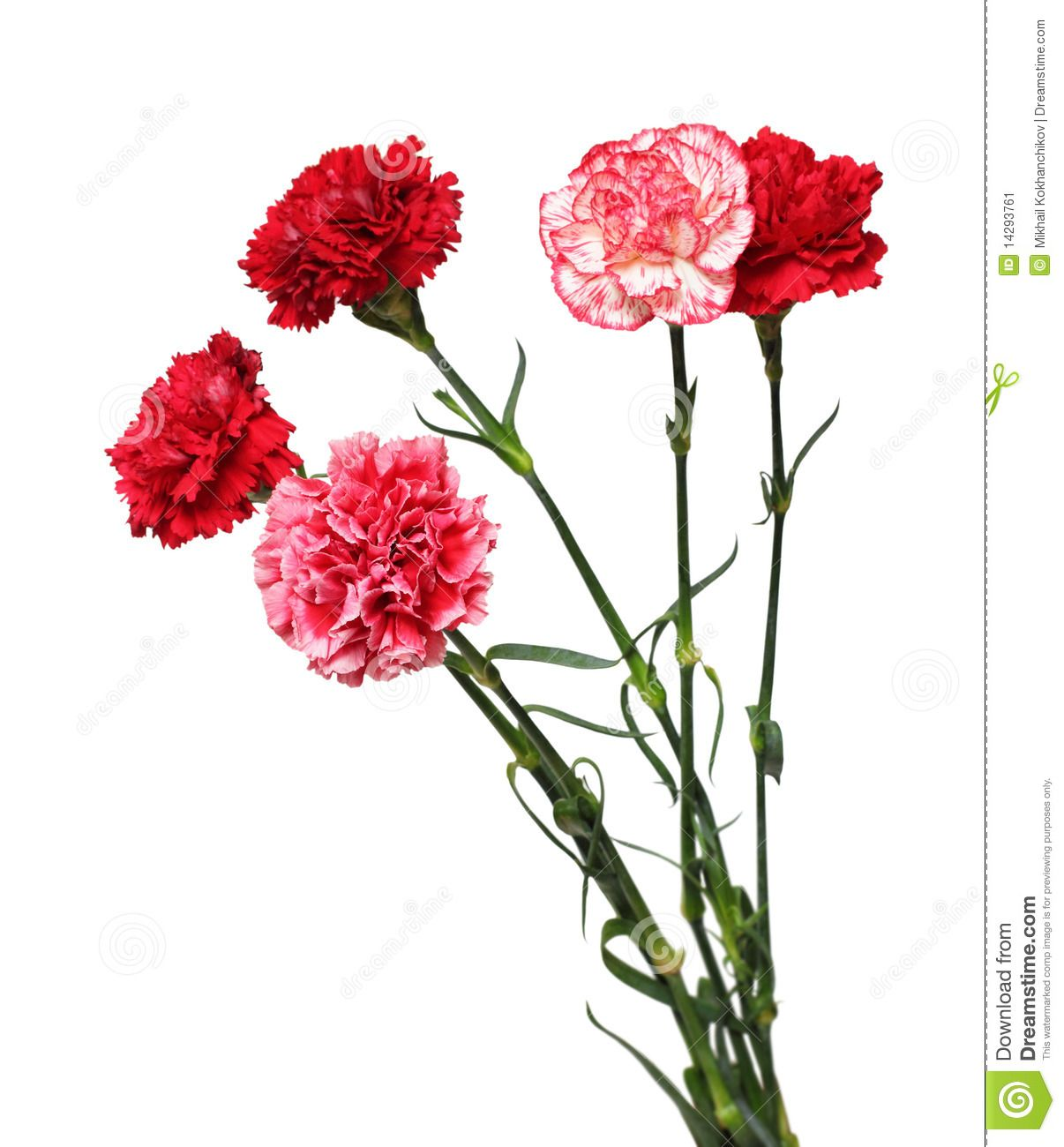 Bouquet Of Carnation Flowers Claveles Flores Pinturas Florales