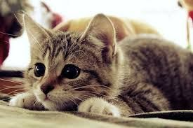 Cute Picture | Kitten | Staring and Focused | Cutearoo | Puppies, Kittens, Baby Animals, Cute Pictures & Videos