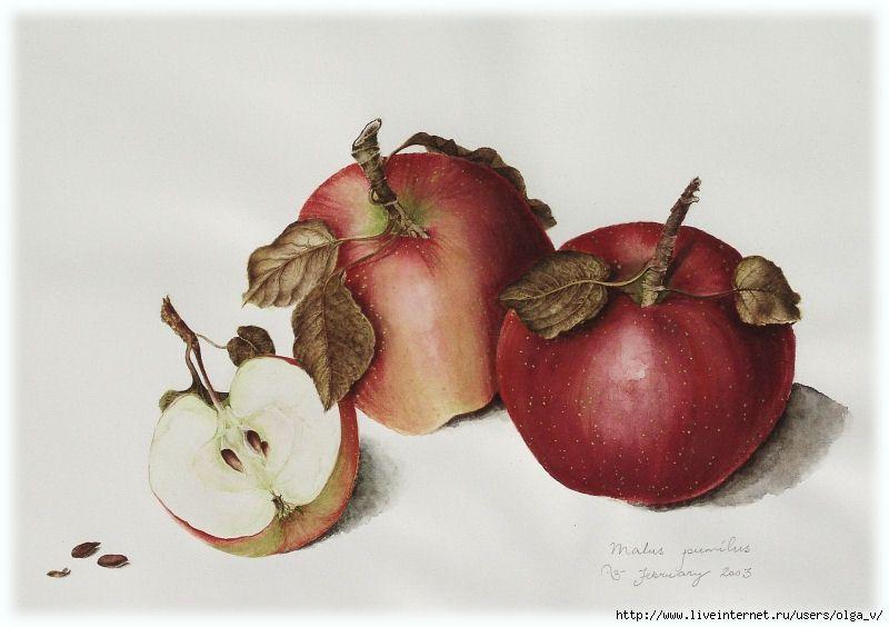 КАРТИНКИ ДЛЯ ТВОРЧЕСТВА- Овощи и фрукты.. Обсуждение на ...