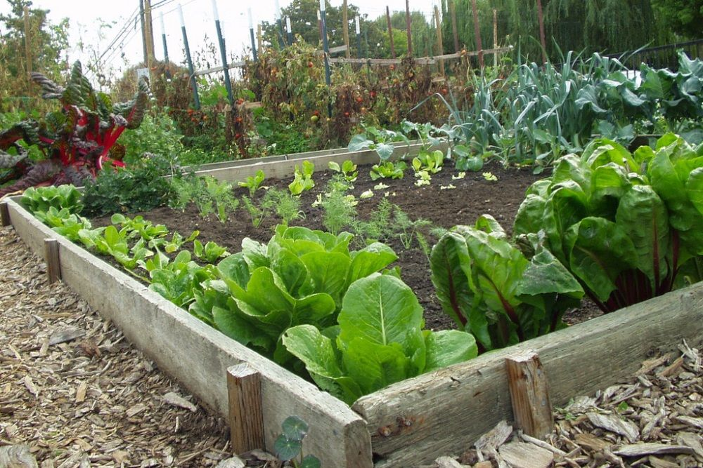 Tipy ako sa zbaviť škodcov v záhrade bez drahej chémie