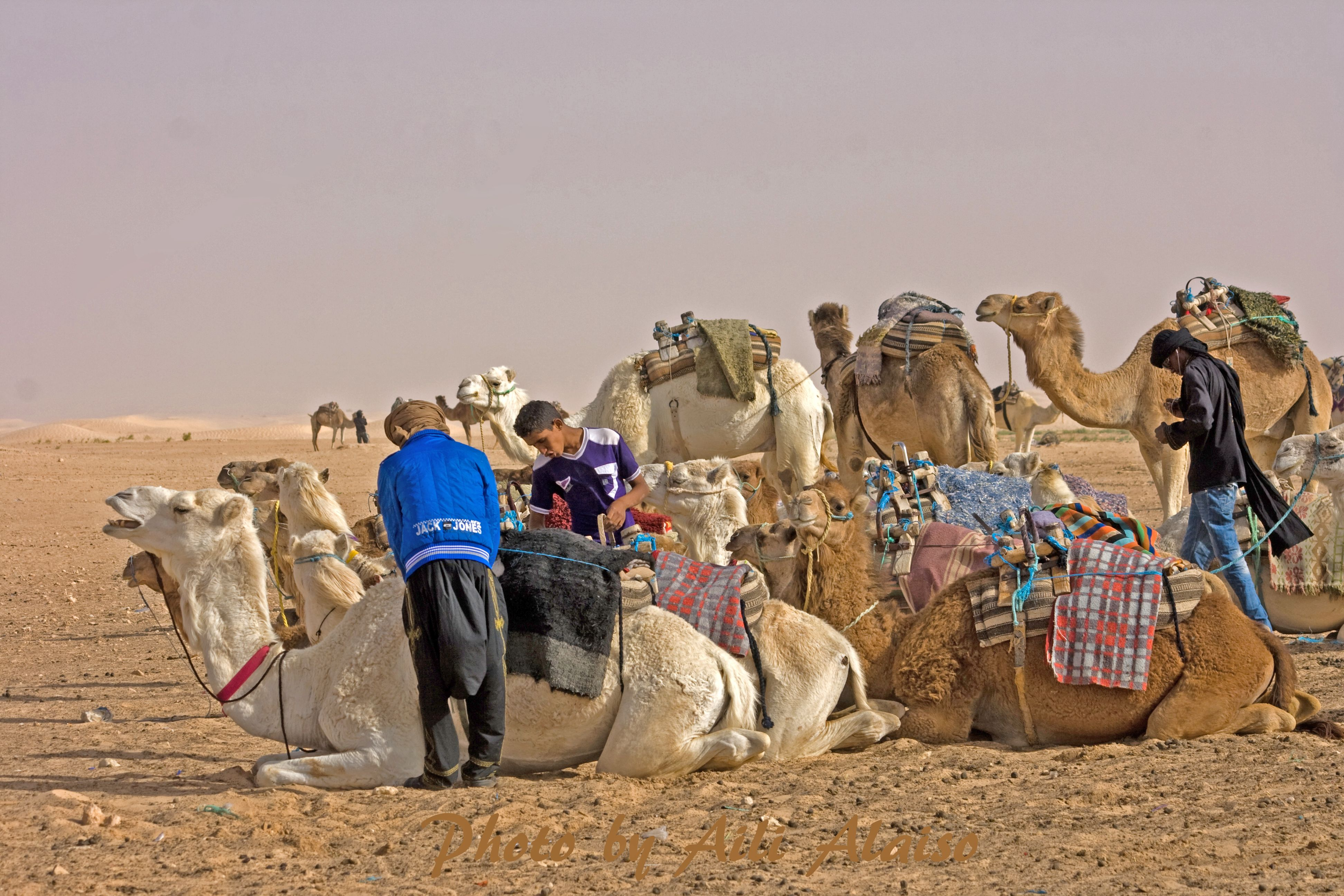 Kameli karavaani lähtee... We are leaving. Sahara Tunisia Photo Aili Alaiso Finland