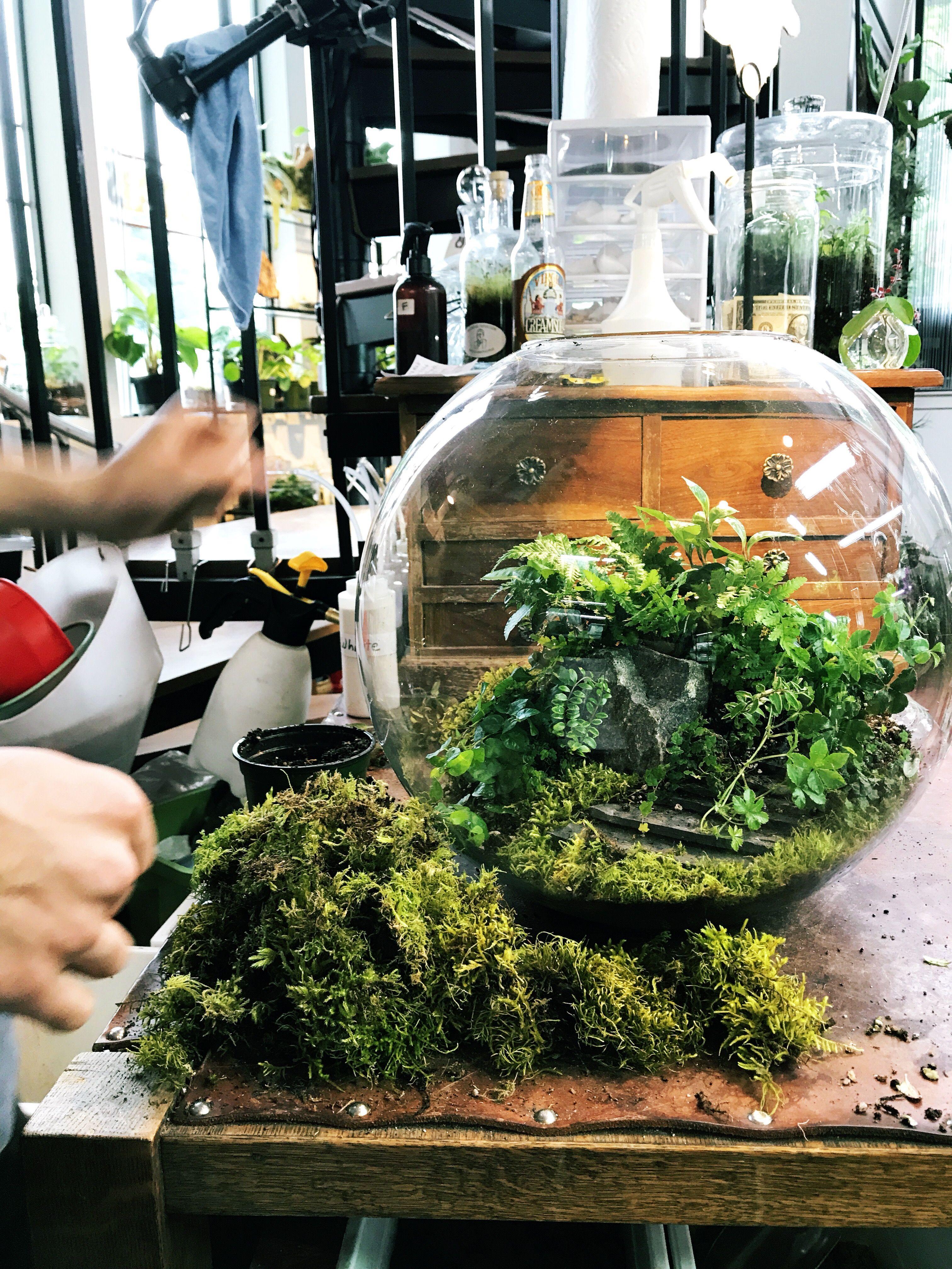 Large Custom Globe Terrarium Woodland Forest Terrarium Planted