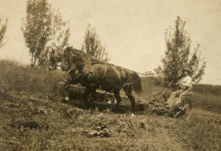 """Almanzo """"haying"""" at Rocky Ridge Farm with their horses, Buck and Billy."""
