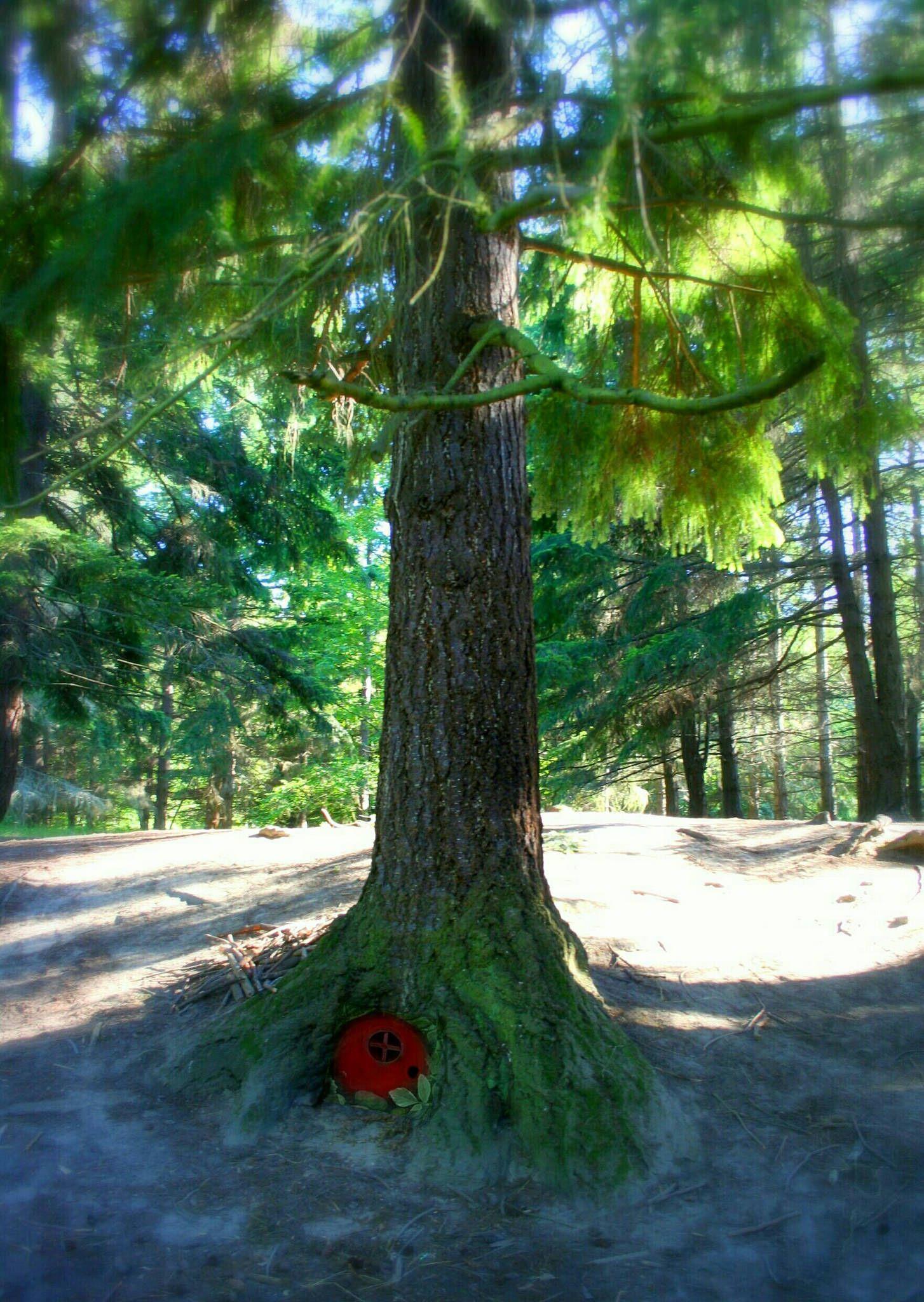 Alexa Open the Magic Door. & Alexa Open the Magic Door... | Tree houses and Gnomes pezcame.com