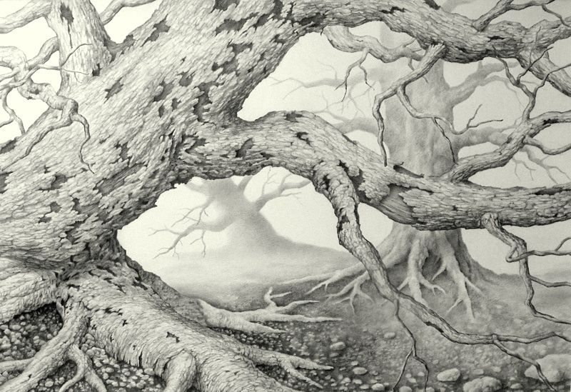 Drawing of a old, dead tree - based on a photo I took years ago. Pencil on bristol paper.