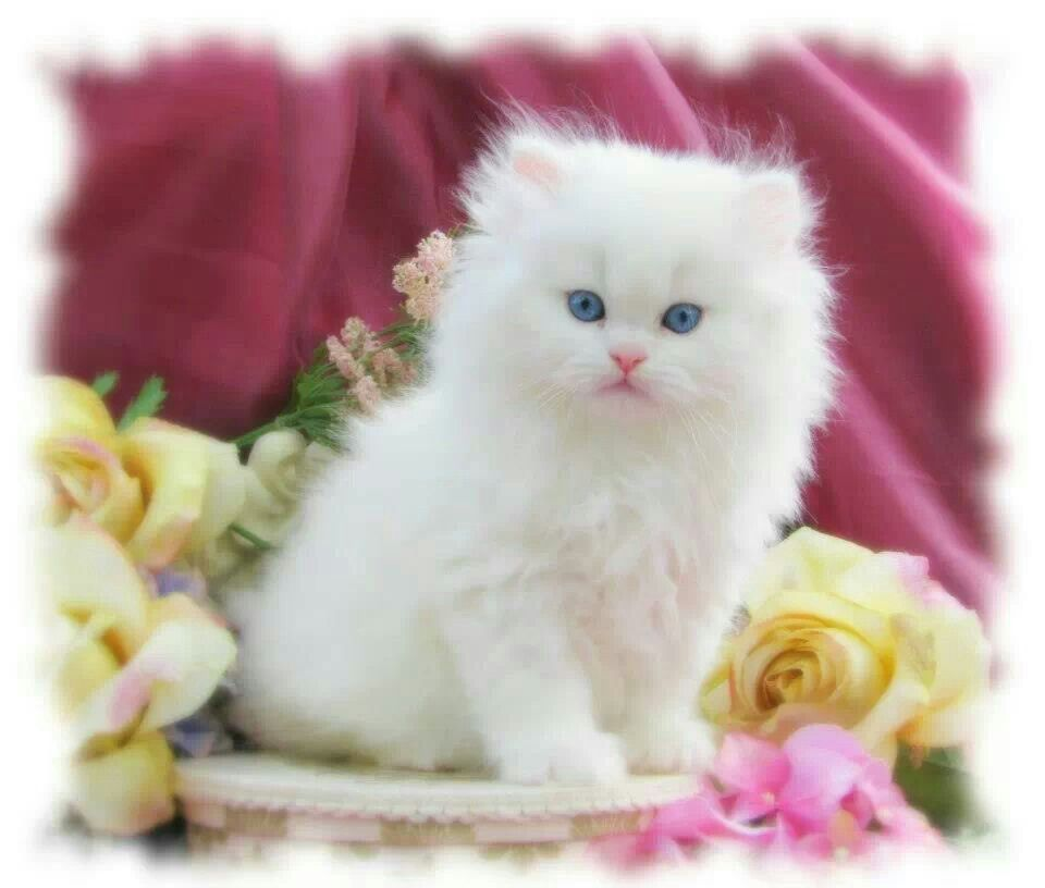 Collection Of Baby Cat Wallpaper On HDWallpapers Cute Wallpapers