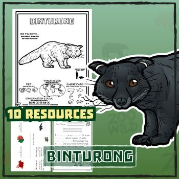 Marvelous Binturong    10 Resources    Coloring Pages, Reading U0026 Activities