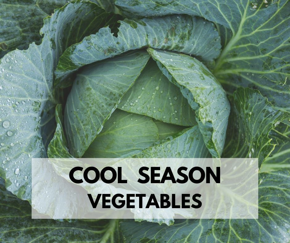 Fall Winter Season 5 Cool Weather Vegetables To Grow