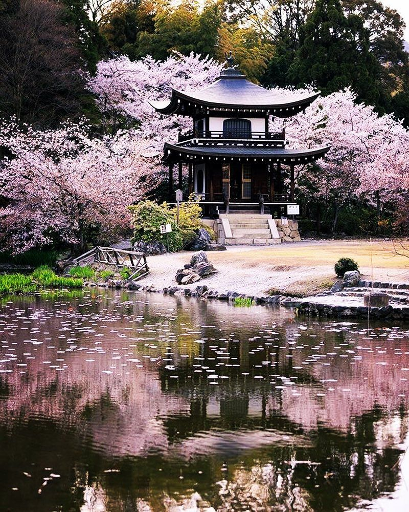 Sakura Blossom Pemandangan Khayalan Pemandangan Sketsa Kota
