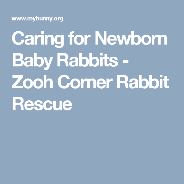 Caring for Newborn Baby Rabbits - Zooh Corner Rabbit Rescue