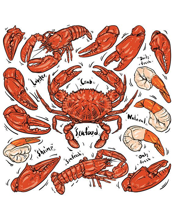 80% Off Sale Seafood hand draw  Crab & Lobster  Hand drawn