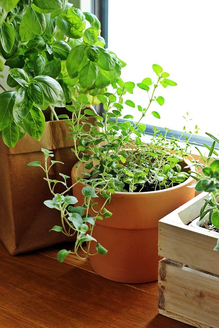 so legst du einen kräutergarten in der küche an, kräutergarten, Hause und garten