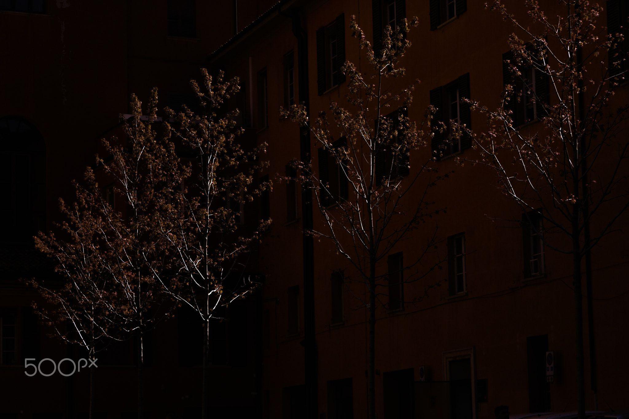 Le piante conoscono la luce - Le piante conoscono bene i distinti sapori della luce (Diego Chozas)