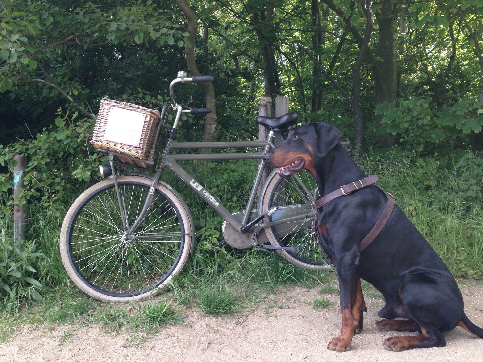 M'n 'elektrische' fiets