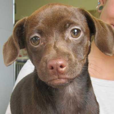 Oh Hi Are You My Forever Family Adopt Animals Pet Adoption Adoption
