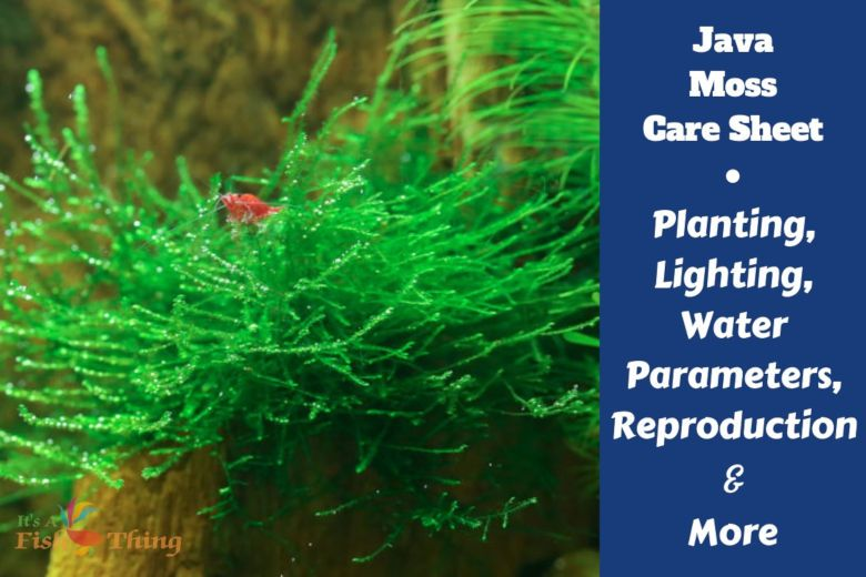 Java Moss Care Guide Growing Tips Propagation Plant Profile