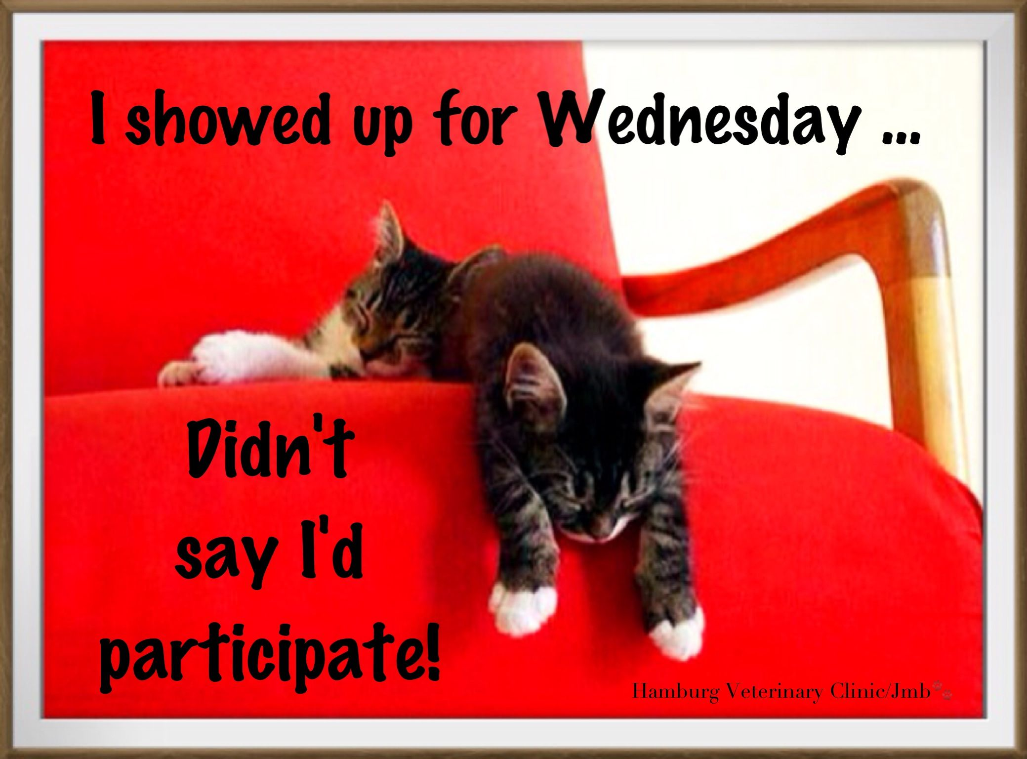 Wednesday humor Delightful wishes for a wonderful day