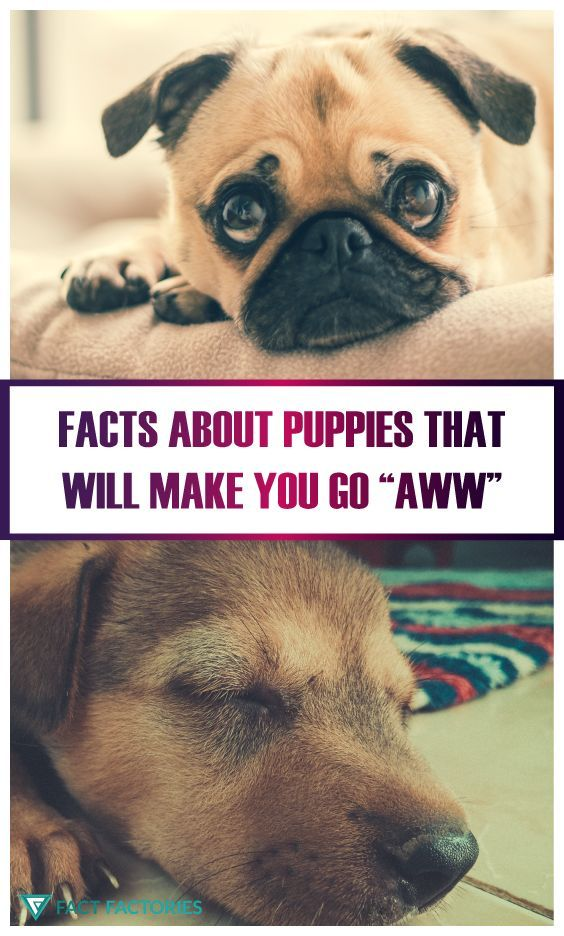 A Few Facts About Puppies That Will Make You Go Aww Puppy